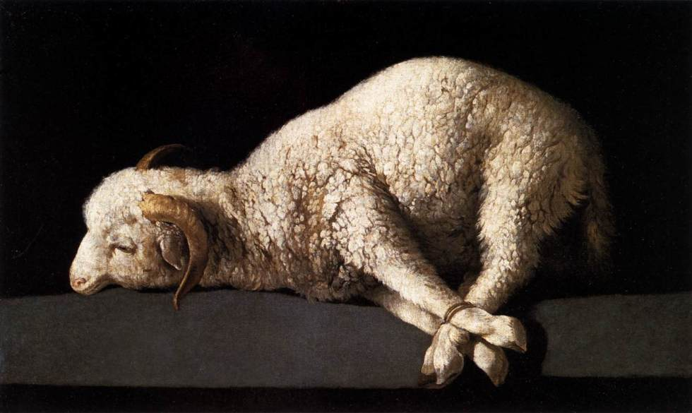 zurbaran-agnus-dei-lamb-of-god-madrid-1339x800