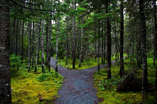fork-in-the-path-st-johns-newfoundland--46570