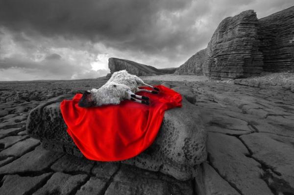 slain-lamb