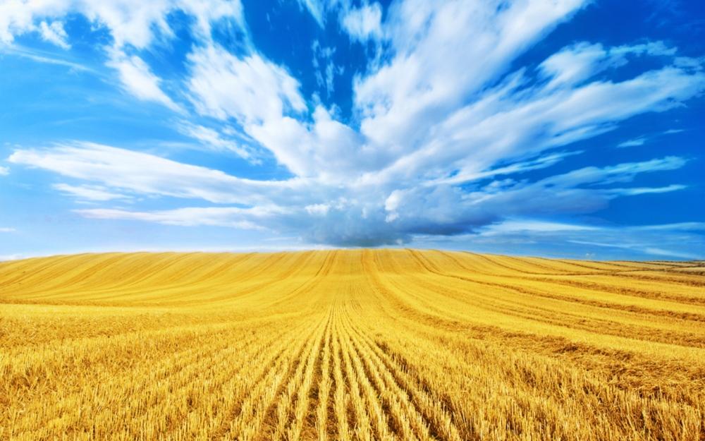 wheat-field-harvest-wallpaper-4
